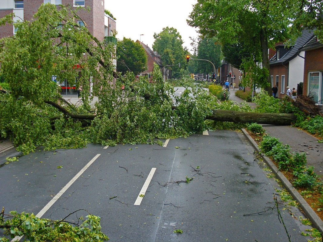 Picture: An uprooted tree is blocking the road. Storm debris litters the area.